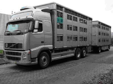 Transport żywych zwierząt rozporządzenie